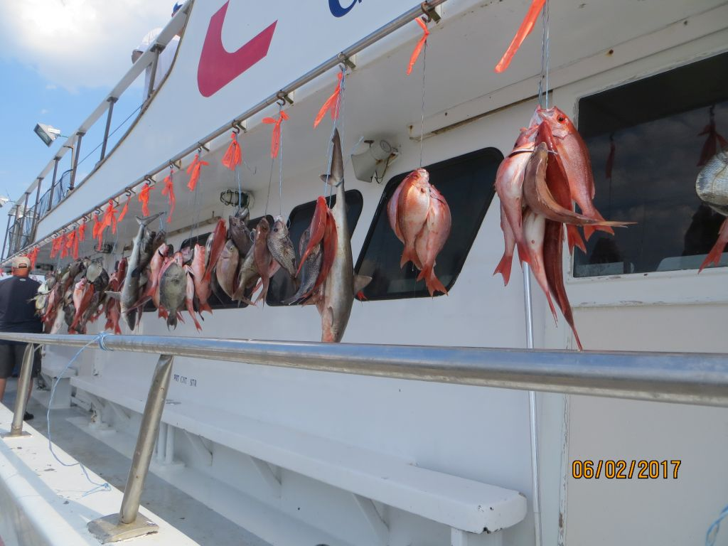 Fishing june 2nd 2017 capt stacy fishing center for Capt stacy fishing center