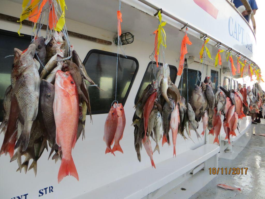 Область интересов рыб в октябре простирается на карьеру, духовные и передовые исследования, чувственность, поездки, чужие финансы и искоренение нежелательного в жизни.