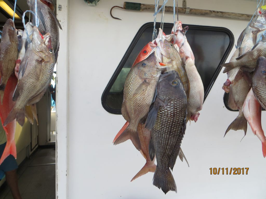 Юные рыбы должны сами во всём разобраться.