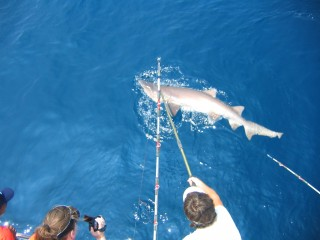Shark Fishing 6-30-09 002
